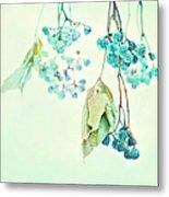 Virginia Creeper Berries Metal Print by Theresa Tahara