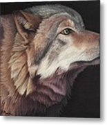 Virginia The Wolf Metal Print