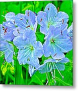 Virginia Waterleaf Near Alamo-michigan Metal Print