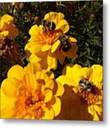 Visiting Bees Metal Print