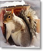 Visiting The Outhouse Metal Print