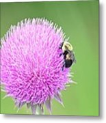 Visitor On Thistle Metal Print