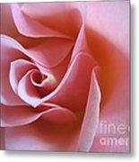 Vivacious Pink Rose 2 Metal Print