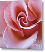 Vivacious Pink Rose 4 Metal Print