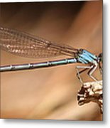 Vivid Dancer Damsel Metal Print