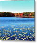 Vivid Fall Colors Metal Print
