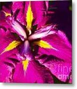 Vivid Iris Metal Print