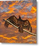 Vivid Vulture Metal Print by Al Powell Photography USA