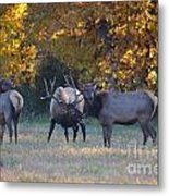 Vocalization Metal Print