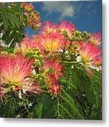 Voluntary Mimosa Tree Metal Print