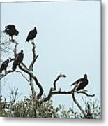 Vulture Club Metal Print