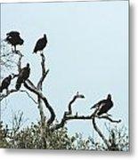 Vulture Club Metal Print