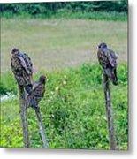 Vulture Fence Line 3 Metal Print
