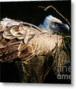 Vulture Resting In The Sun Metal Print