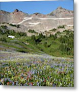 Wa, Goat Rocks Wilderness, Wildflower Metal Print
