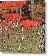 Wachusett Meadows 4 Metal Print