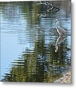 Wading Bird Metal Print