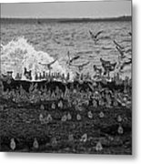 Wading Birds-black And White V2 Metal Print