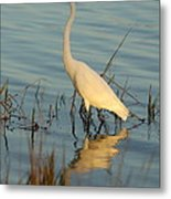 Wading The Pond Metal Print