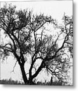 Waiting By Our Tree Metal Print