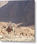 Waiting For A Rider Metal Print