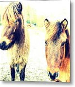 Eager Horses Waiting For Their Simple Dinner Metal Print