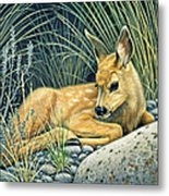 Waiting For Mom-mule Deer Fawn Metal Print