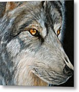 Waiting Wolf Metal Print