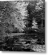 Walden Pond Metal Print by Christian Heeb