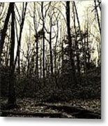 Walk Into Nature Metal Print