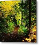 Walking An Autumn Path Metal Print
