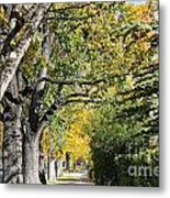 Walking Down Senators Highway Metal Print