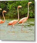 Walking Flamingos Metal Print