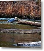 Walking Heron Metal Print