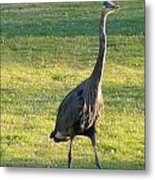 Walking On The Grass Metal Print
