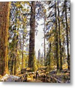 Walking Small In The Tall Forest Metal Print