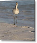 Walking Tall Metal Print by Charles Warren
