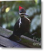 Walking With A Waddle Metal Print