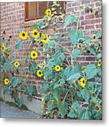 Wall Of Sunflowers 1 Metal Print