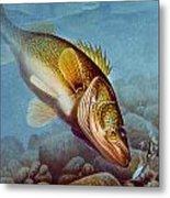Walleye Ice Fishing Metal Print by Jon Q Wright