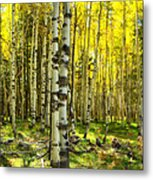 Wandering In The Woods  Metal Print
