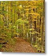 Wandering Trail 6 Metal Print