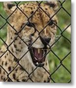 Wanting Freedom Metal Print