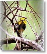 Warbler - Black-throated Green Warbler Metal Print