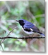 Warbler With Lunch Metal Print