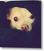 Warm And Cozy Metal Print