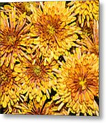 Warm And Sunny Yellows Golds And Oranges Metal Print