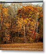 Warm Autumn Glow Metal Print