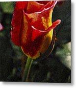 Warm Colored Rosebud  Metal Print