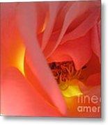 Warm Glow Pink Rose 2 Metal Print